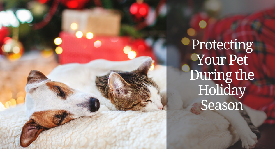 blog image of cat and dog cuddling in front of a christmas tree